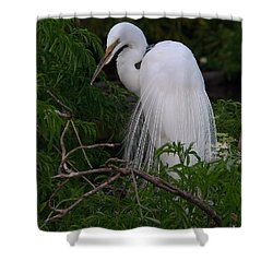 Shower Curtain featuring the photograph Great Egret Nesting by Art Whitton