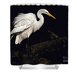 Great Egret Ruffles His Feathers Shower Curtain by Art Whitton