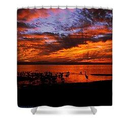 Great Heron Sunset Shower Curtain