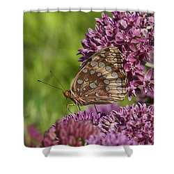 Great Spangled Fritillary Din194 Shower Curtain