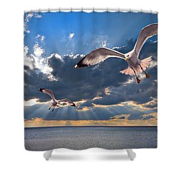 Greek Gulls With Sunbeams Shower Curtain by Meirion Matthias