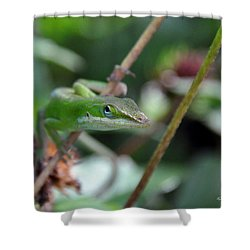 Green Anole Shower Curtain by Kay Lovingood