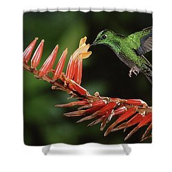 Green-crowned Brilliant Heliodoxa Shower Curtain by Michael & Patricia Fogden