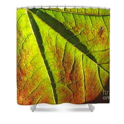 Green Days Past Shower Curtain by Trish Hale