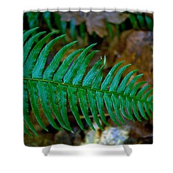Shower Curtain featuring the photograph Green Fern by Tikvah's Hope