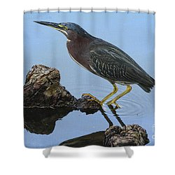 Green Heron Visiting The Pond Shower Curtain by Deborah Benoit