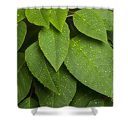 Green Leaves And Water Drops Shower Curtain by James BO  Insogna
