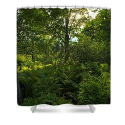 Green Light Shower Curtain by Steve Gadomski