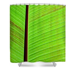 Green Lines Shower Curtain by Sabrina L Ryan