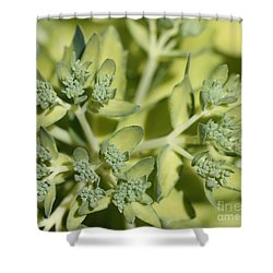 Green On Green Shower Curtain by James E Weaver