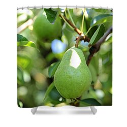 Green Pear Shower Curtain by Carol Groenen