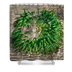 Green Sea Anemone Shower Curtain