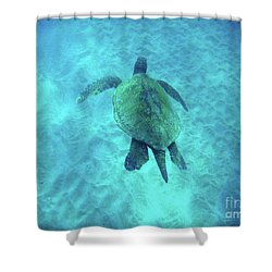 Green Sea Turtle 2 Shower Curtain by Bob Christopher