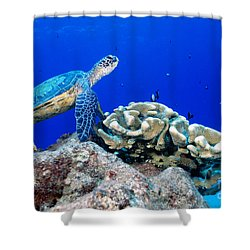 Green Sea Turtle Shower Curtain by Andrew G Wood and Photo Researchers