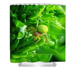 Green Spider 2.0 Shower Curtain by Yhun Suarez