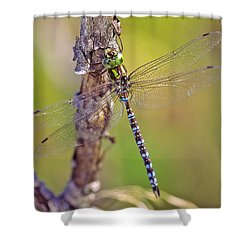 Green-striped Darner Dragonfly Shower Curtain