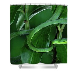 Green Vine Snake Oxybelis Fulgidus Shower Curtain by Michael & Patricia Fogden