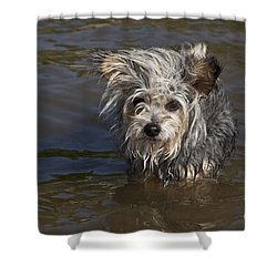 Shower Curtain featuring the photograph Gremlin by Jeannette Hunt