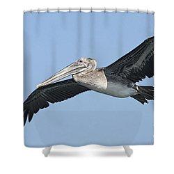 Grey Pelican Shower Curtain by Deborah Benoit