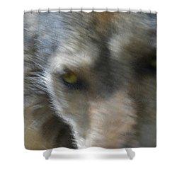 Grey Wolf Painterly Shower Curtain by Ernie Echols