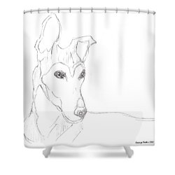 Shower Curtain featuring the drawing Greyhound by George Pedro