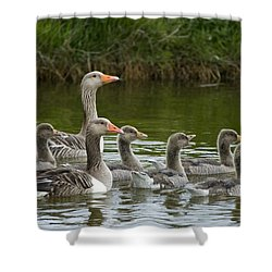 Greylag Goose Anser Anser Couple Shower Curtain by Willi Rolfes