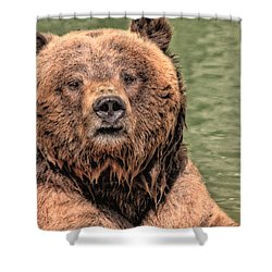 Grizz With Stick Shower Curtain by Karol Livote