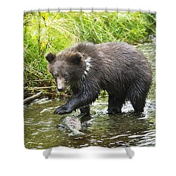 Grizzly Cub Catching Fish In Fish Creek Shower Curtain by Richard Wear