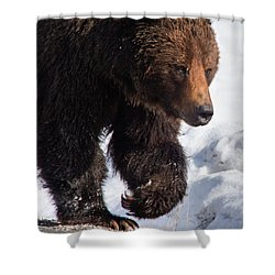 Shower Curtain featuring the photograph Grizzly On Snow by J L Woody Wooden