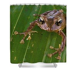 Ground Frog Nakanai Mts Papua New Guinea Shower Curtain by Piotr Naskrecki