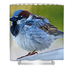 Shower Curtain featuring the photograph Guard Bird by Colleen Coccia