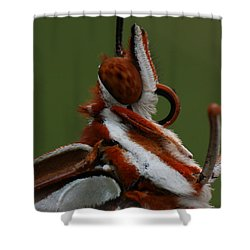 Shower Curtain featuring the photograph Gulf Fritillary Butterfly Portrait by Daniel Reed