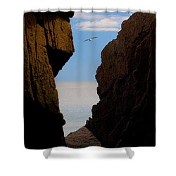 Gulls Of Acadia Shower Curtain by Brent L Ander