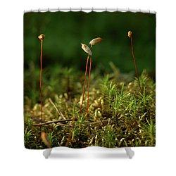Haircap Moss Shower Curtain by Jouko Lehto