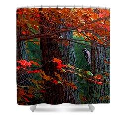 Hairy Woodpecker Shower Curtain by Ron Jones