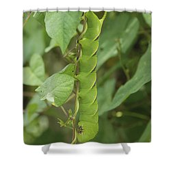 Hangin' Around Shower Curtain by Kay Lovingood