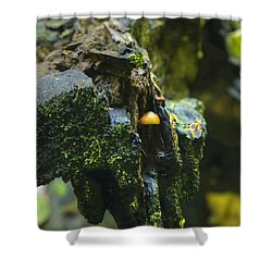 Hanging In There Shower Curtain by Michael Peychich