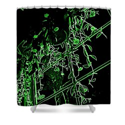 Shower Curtain featuring the photograph Hanging Plants In Window by Renee Trenholm