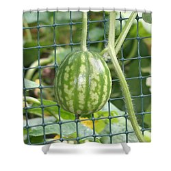 Hanging Watermelon Plant Shower Curtain by Barbara S Nickerson