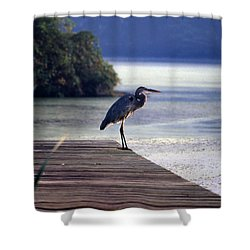 Harbor Master Shower Curtain by Skip Willits