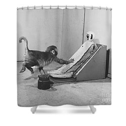 Harlow Monkey Experiment Shower Curtain by Science Source