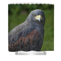 Shower Curtain featuring the photograph Harris Hawk by Clare Bambers