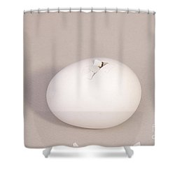 Hatching Chicken 3 Of 22 Shower Curtain by Ted Kinsman