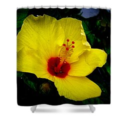 Shower Curtain featuring the photograph Hawaiian Yellow Hibiscus by Athena Mckinzie
