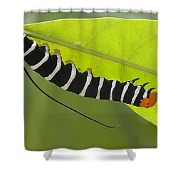 Hawk Moth Caterpillar Guyana Shower Curtain by Piotr Naskrecki