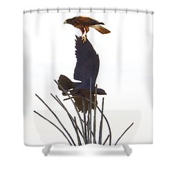 Shower Curtain featuring the photograph Hawk On Statue by Rebecca Margraf