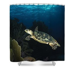 Hawksbill Sea Turtle Swimming Shower Curtain by Todd Winner