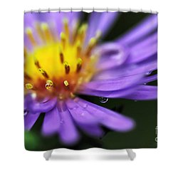 Hazy Daisy... With Droplets Shower Curtain by Kaye Menner
