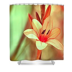 hd 394 hdr - Champagne Shower Curtain by Chris Berry