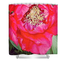 Heart Of The Peony By Anna Porter Shower Curtain